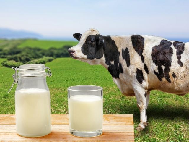 日本と違う!フランスの乳製品事情
